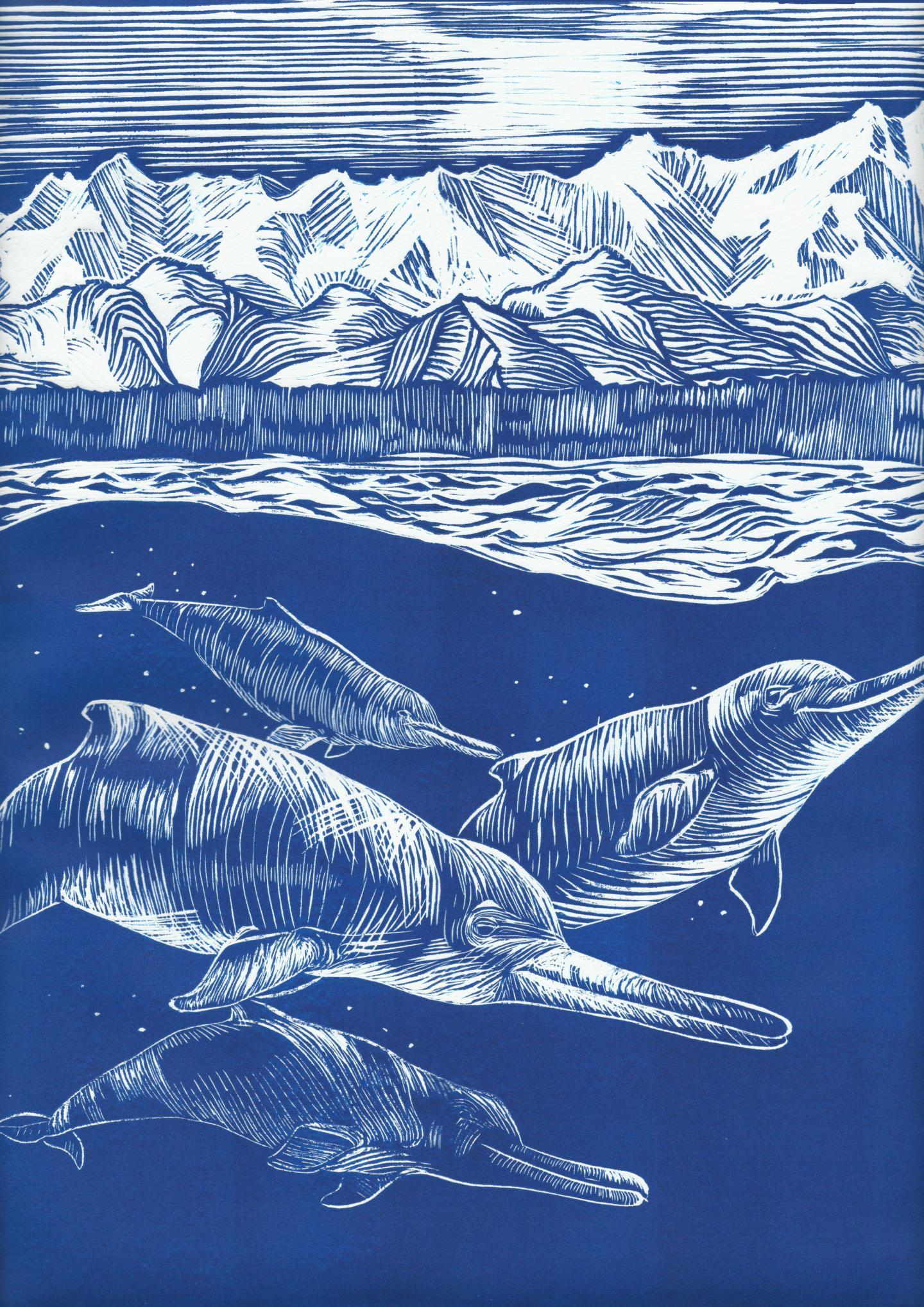 Alaska Fossil Ancient Skull Retraces Evolution Of