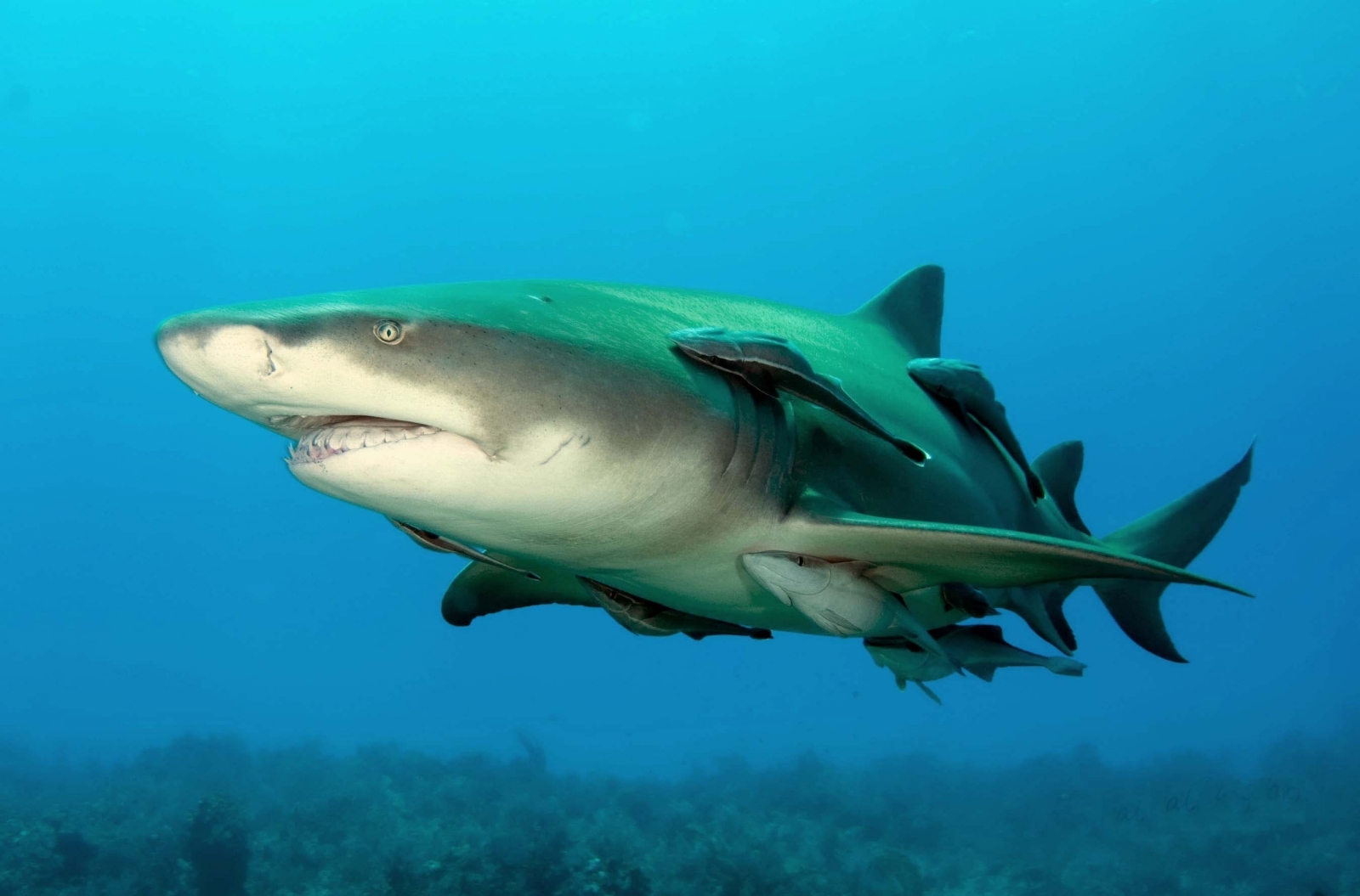 5 Incredible Facts About Sharks