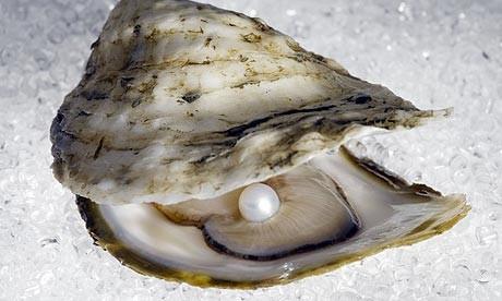https://i2.wp.com/d.ibtimes.co.uk/en/full/348474/oyster-pearl.jpg