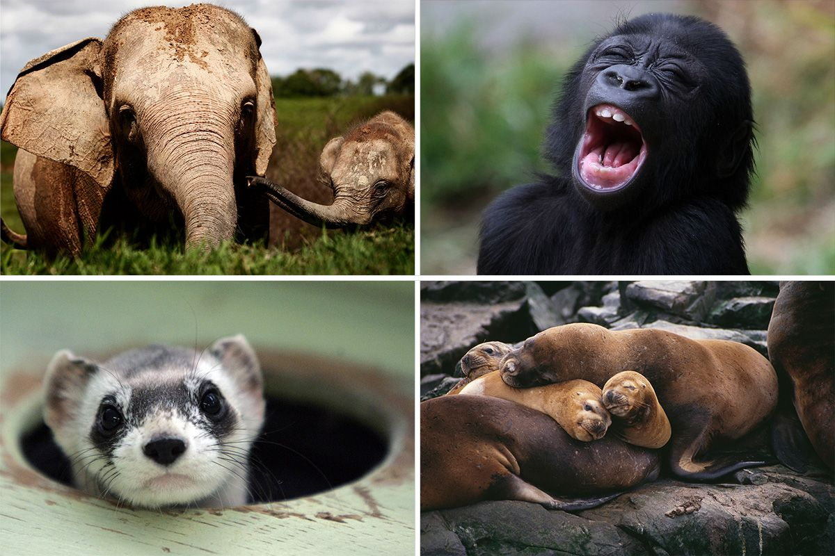 The Most Endangered Animals On The Planet And Why They
