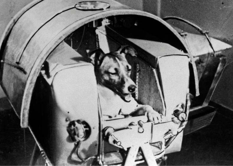 1957: Dogs beat humans into outer space