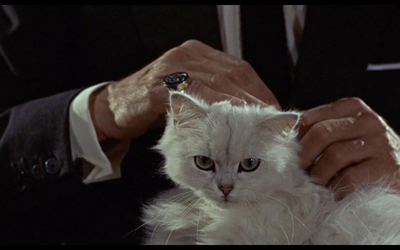 Blofeld cat