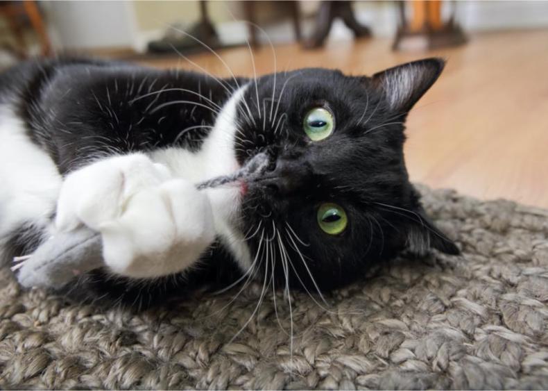 Does catnip really make cats go crazy?
