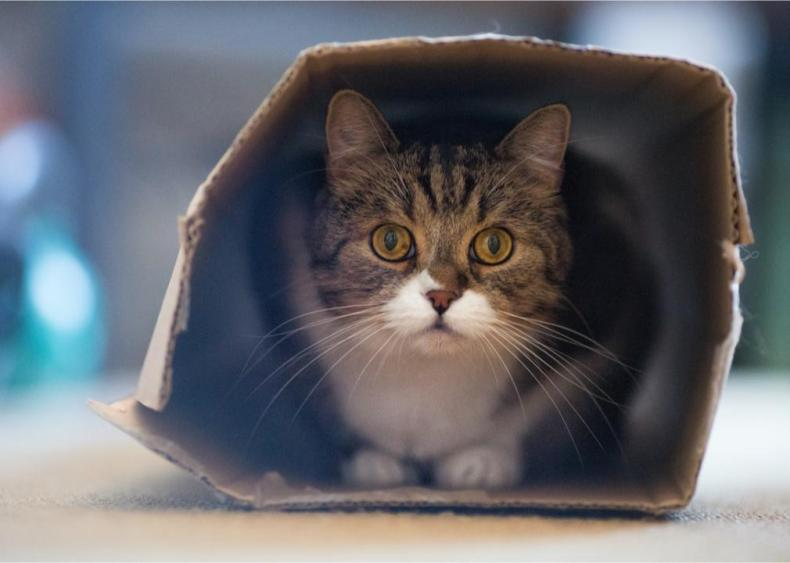 What's my cat's obsession with boxes all about?