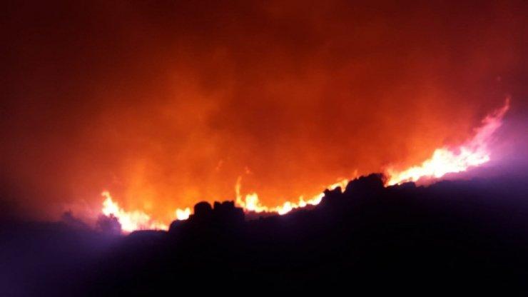 palamutbükü yangını ile ilgili görsel sonucu