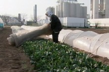Japan Radiation and Food Contamination