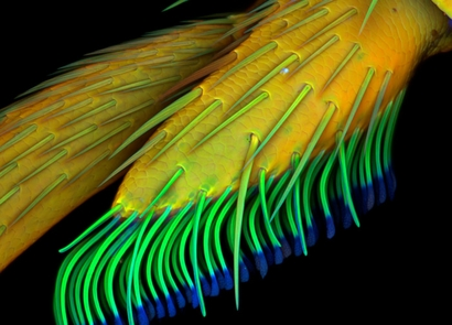 8th Place 2010 Olympus BioScapes Digital Imaging ...