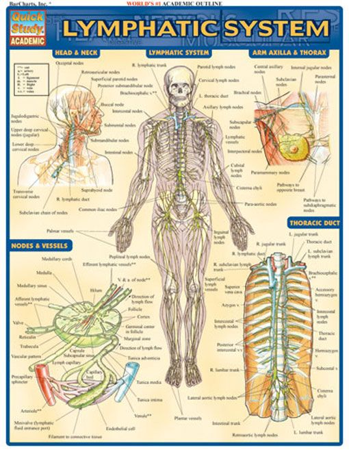 Lymphatic System  Examville