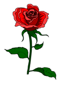 IW-rose