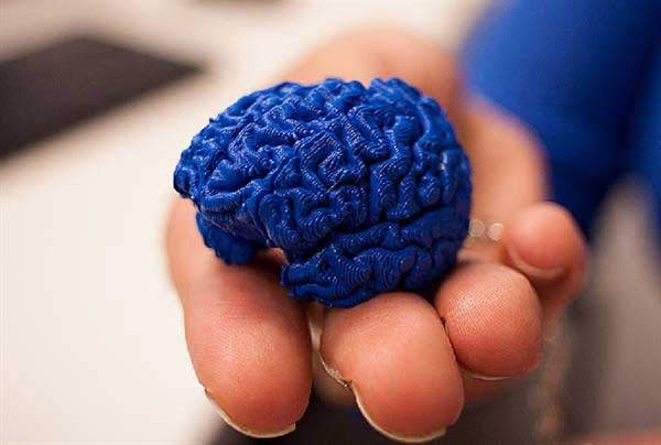 penn-state-turns-to-3d-printing-to-teach-students-about-brains-in-brain3m-educational-program-1