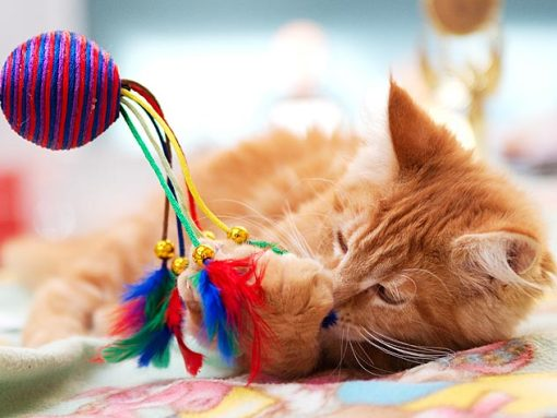 Image result for cats keep you entertained
