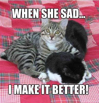 Cat Makes Me Feel Uncomfortable Funny Meme Cat Feel Funny Meme Uncomfortable Funny Cat Memes Monkeys Funny Funny Good Morning Memes