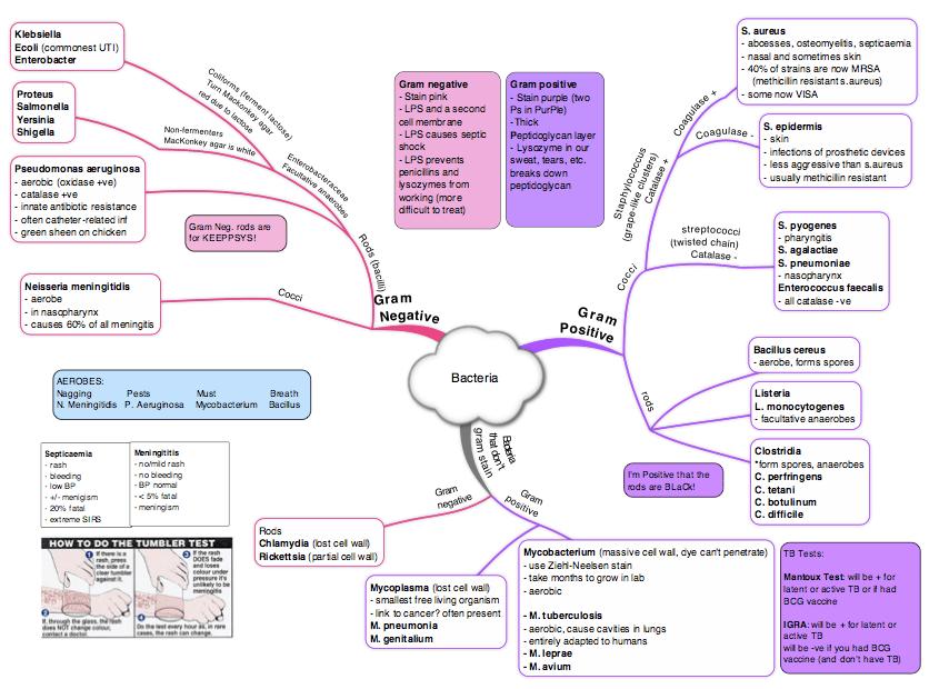 Concept Map Bacteria.Immunity Bacteria Concept Map