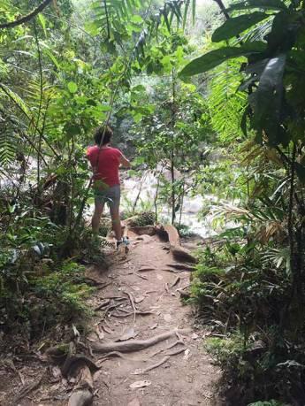 Taking photos Daintree Rainforest and Mossman Gorge