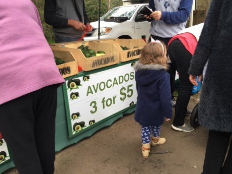 Avocados Warrandyte Market