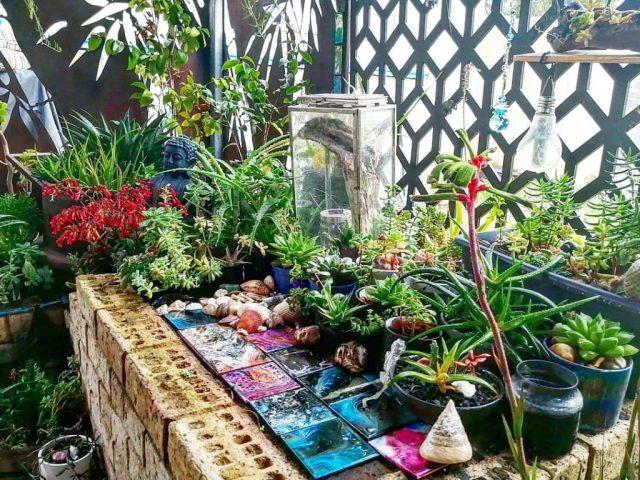 Are Succulents Herbaceous Plants