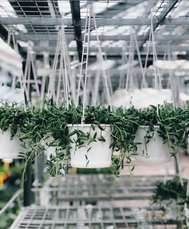 The 11 Best Trailing Succulents