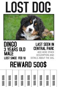 lost dog flyer example yerat