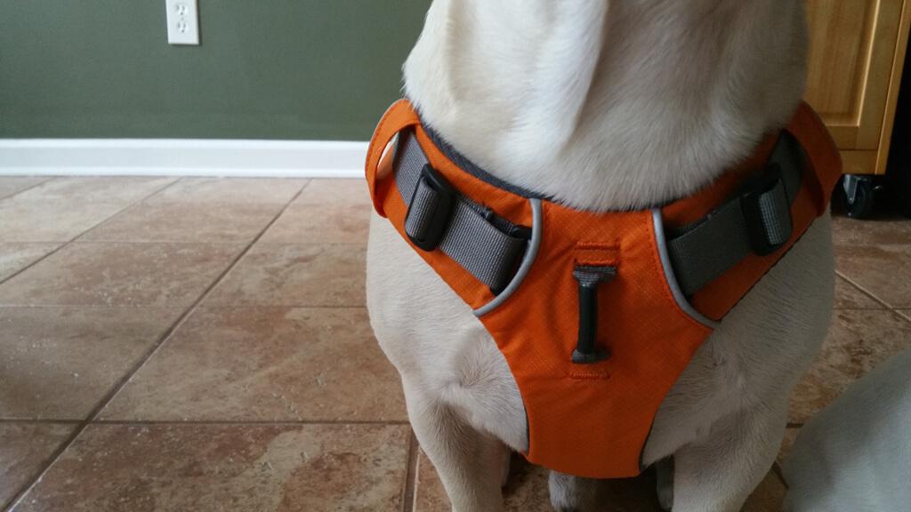 The Best French Bulldog Harness Money Can Buy