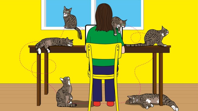 I didn't like cats... until the pandemic | Financial Times