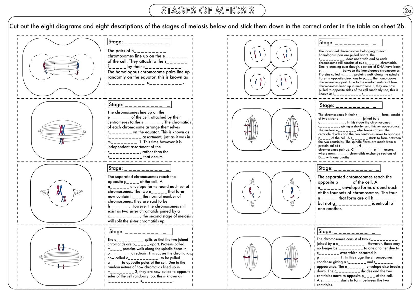 A Level Biology Cell Division Mitosis And Meiosis