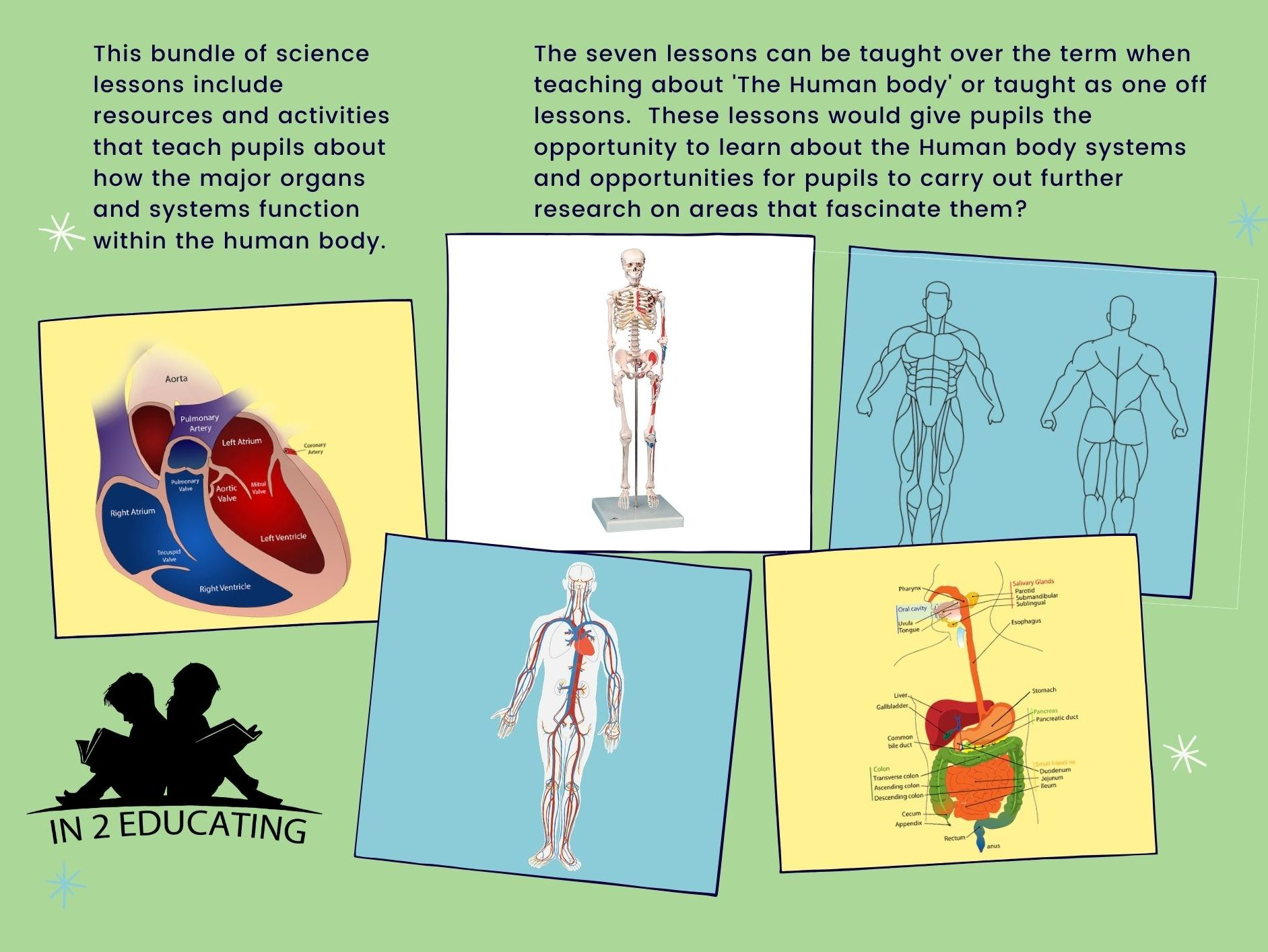 Ks2 Science Human Body Systems Bundle