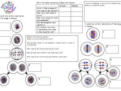Image Result For Jobs Worksheet For Kindergarten