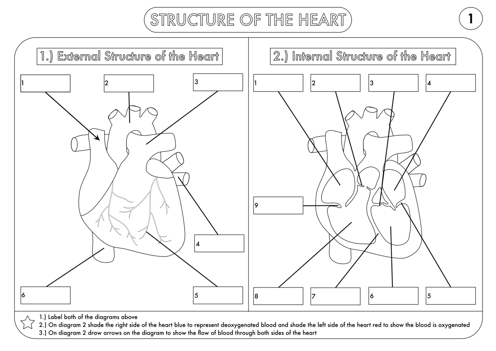 A Level Biology Bundle On The Heart And Circulation