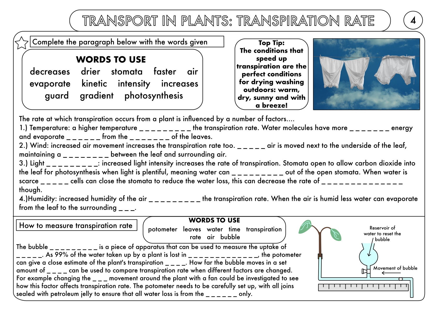 Gcse Plant Biology Worksheet Bundle By Beckystoke