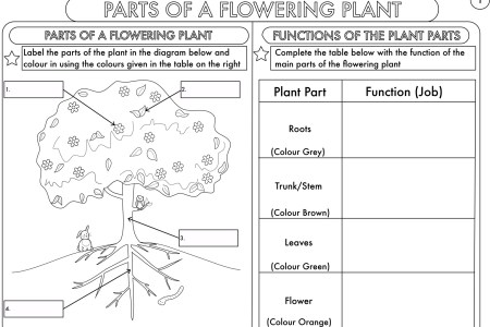 Diagram of flowering plant to label beautiful flowers 2019 diagrams glossary of plant morphology label flowering plant anatomy basic plant life cycle and the life cycle of a flowering plant plant diagram awesome ccuart Images