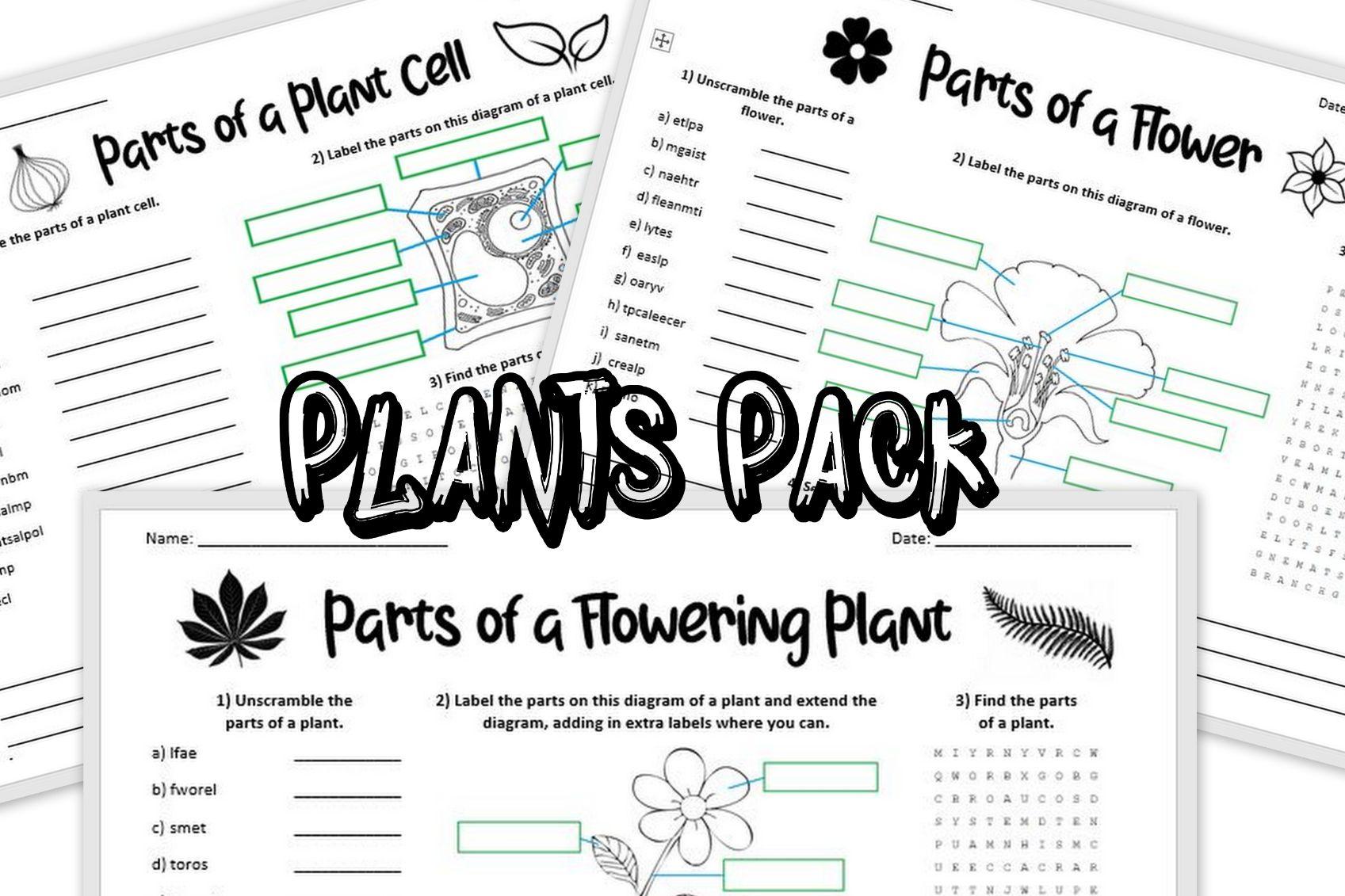 Plants Worksheet Pack