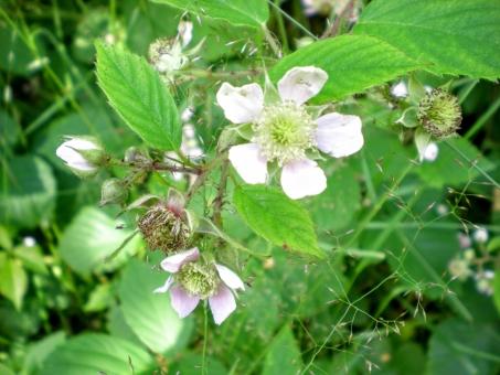 「北欧の花 無料写真」の画像検索結果