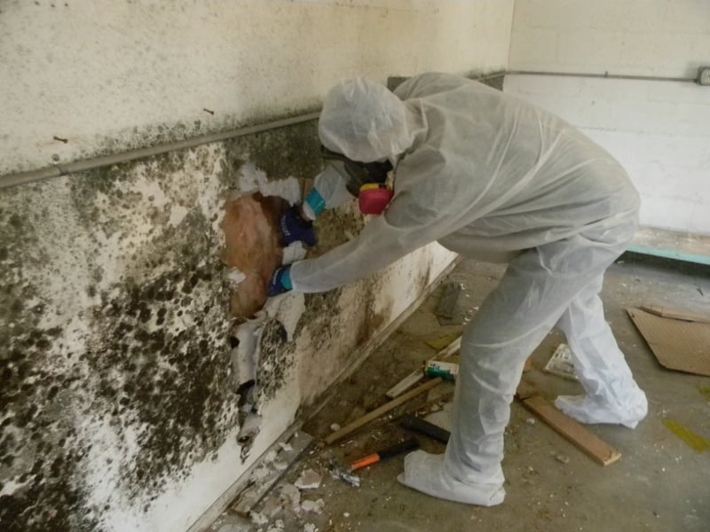 Image Result For How To Get Rid Of Mildew Smell In Ba T