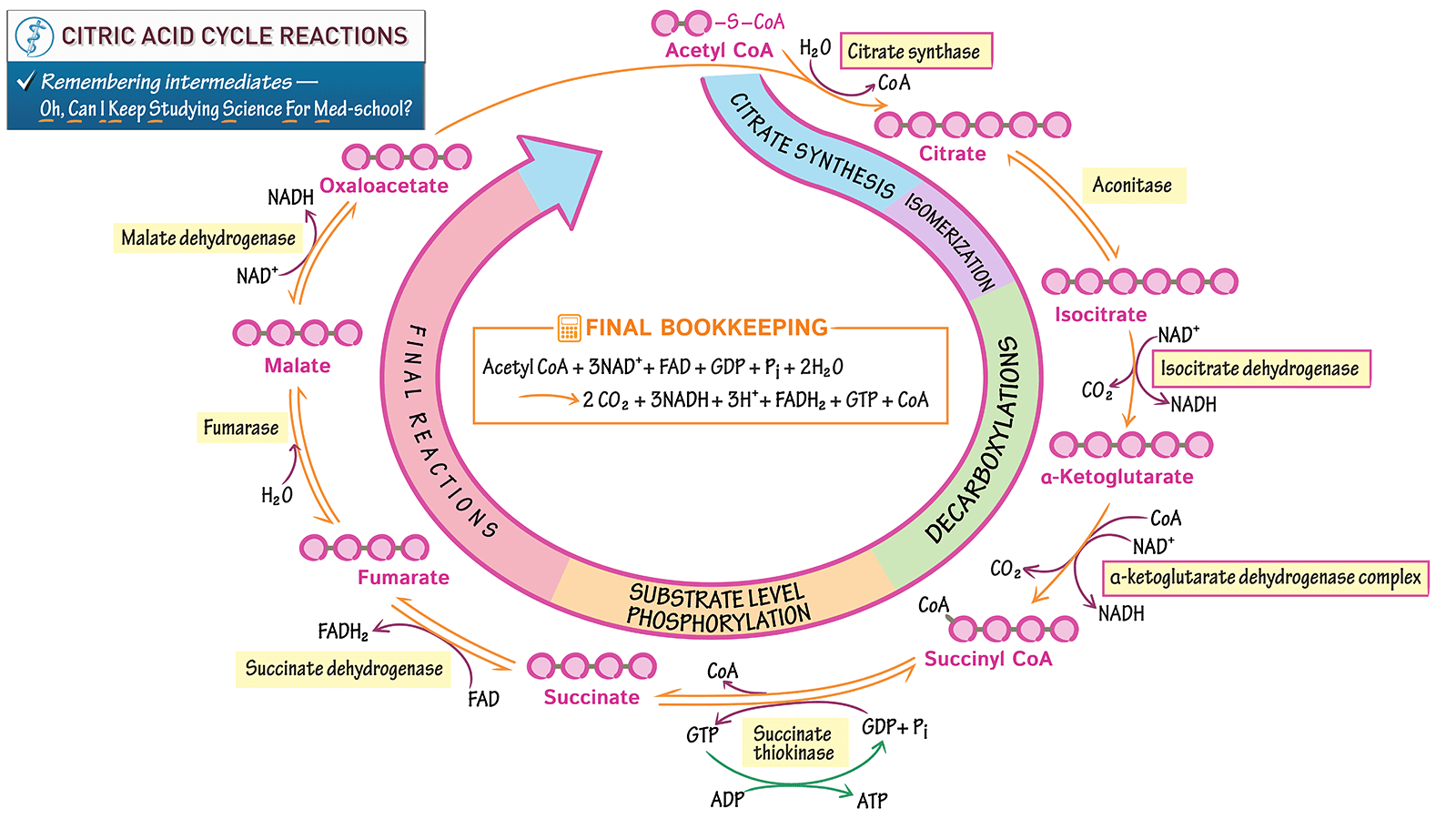 Cell Biology Reactions Of The Citric Acid Cycle