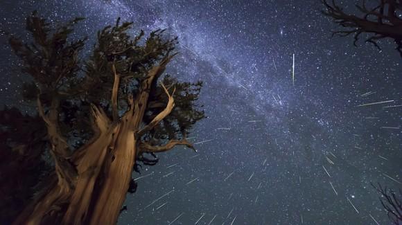 Los meteoros Perseidas más antiguo del pino de Bristlecone en las montañas blancas de California.  Esta es una foto compuesta de 73 meteoros, alineados ya que fueron capturados de acuerdo a lo que eran en contra de las estrellas.  Créditos y derechos de autor: Kenneth Brandon.