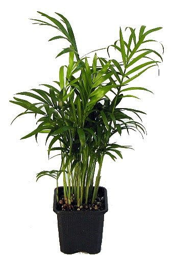 houseplant, plants, bedroom