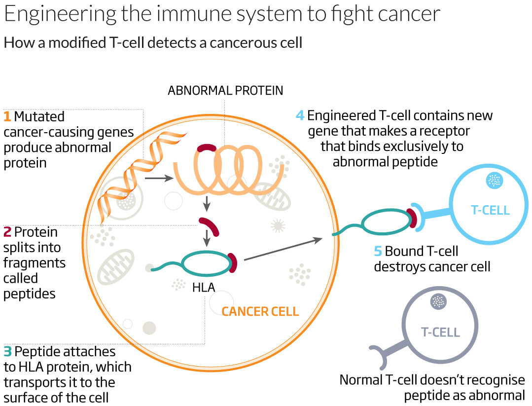 Cancer Meets Its Nemesis In Reprogrammed Blood Cells