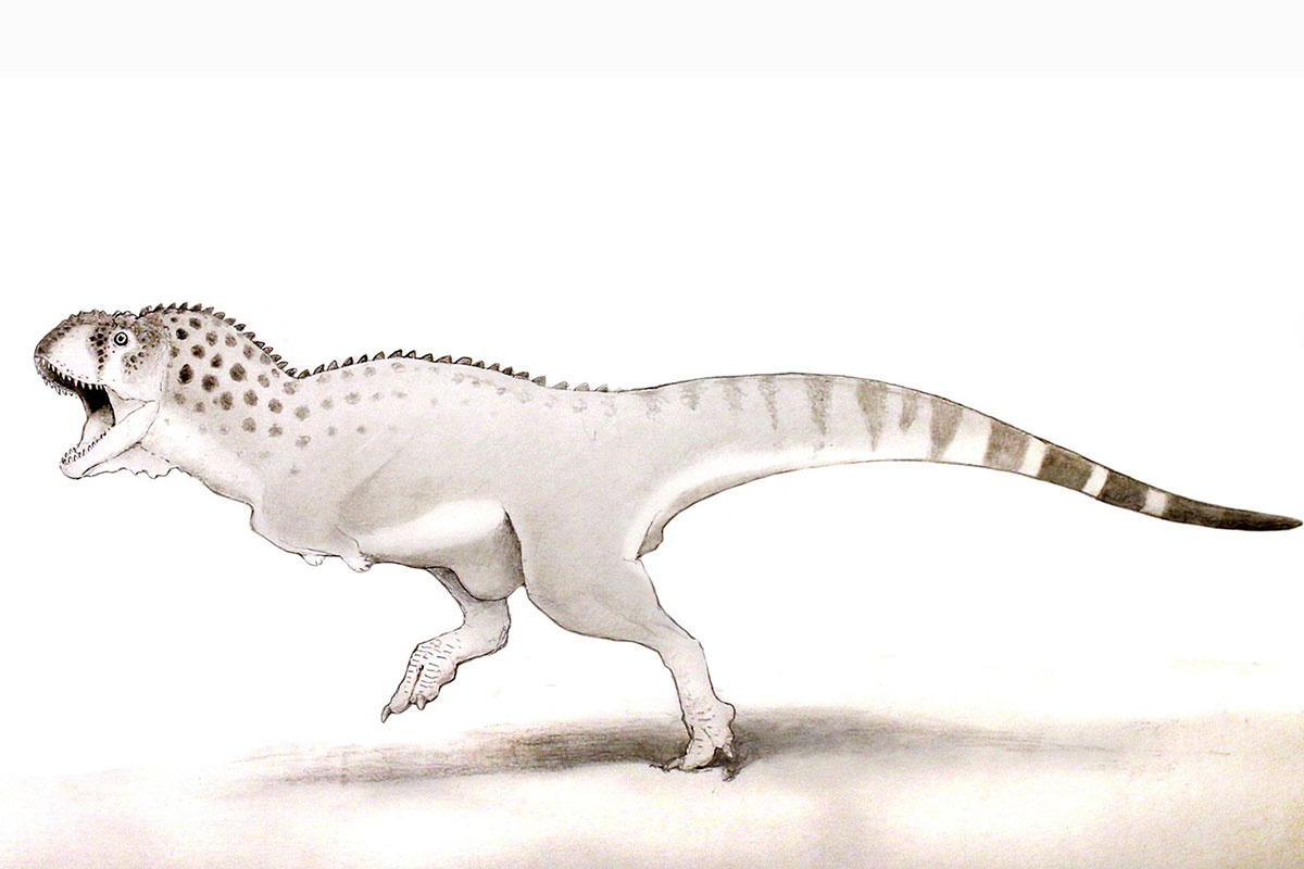African T Rex Was One Of Last Dinosaurs Alive Before