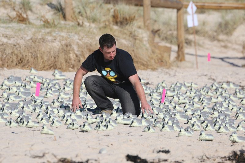 Man amid cluster of fake ducks on the sand
