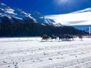 White Turf, St. Moritz, frozen Lake