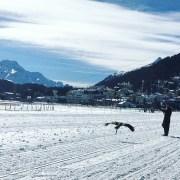 White Turf, St. Moritz, frozen Lake, eagle