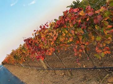 Scheiblhofer vineyards