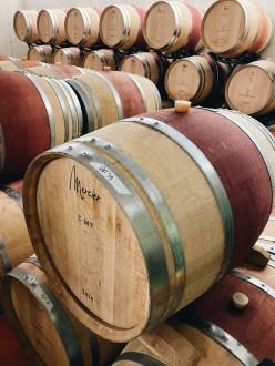 Visiting the Fattoria Moncucchetto Winery
