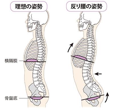 尿漏れトレーニング】横隔膜を動かして骨盤底筋を鍛える方法で20年来の悩みが解消! - 特選街web