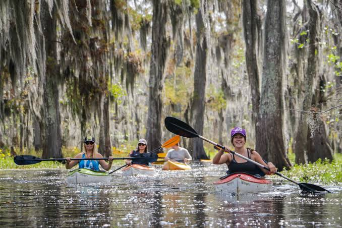 Things to do in New Orleans; Swamp Tours