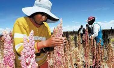 Agriculture in Bolivia.