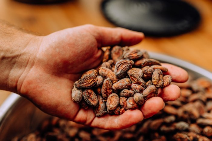 This image shows raw cacao beans, which introduced new nutritional elements to European diets.