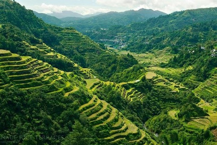 A series of verdant mountains, organized into what appear to be steps (rice terraces).