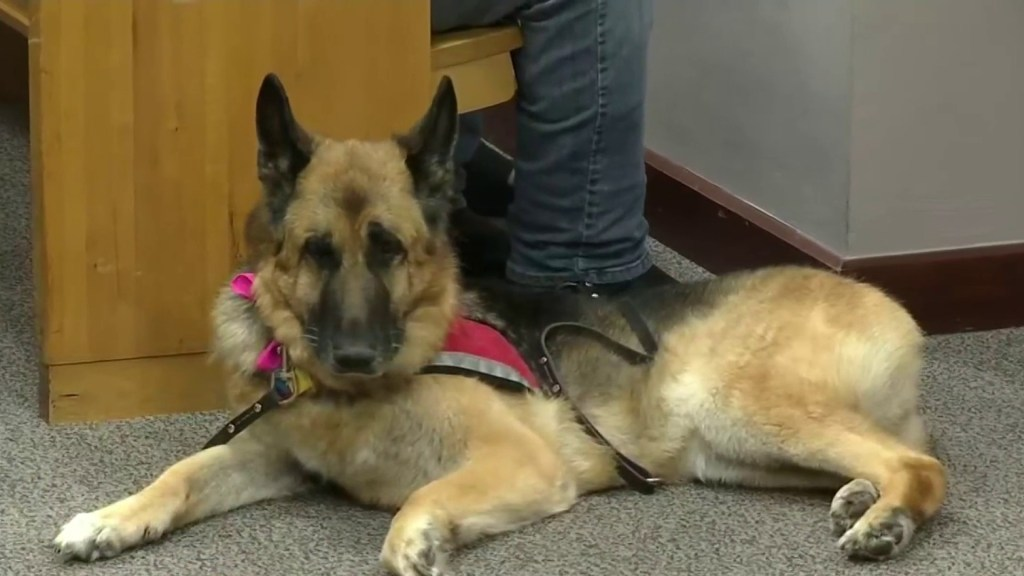 Florida groomer who broke service dog's tail sentenced to 180 days in jail, 3 years probation
