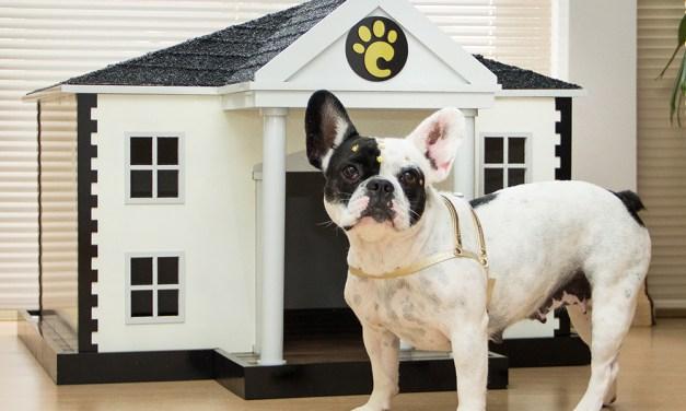 15 casinhas de cachorro diferentonas